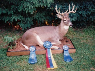 Award Winning Full Body Mount Taxidermy at Moyer's Taxidermy